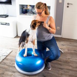 Hundephysiotherapie Tierphysiotherapie Gymdog